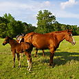 Vine's Mare and Baby