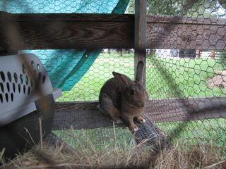 New rabbits 004