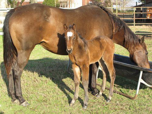 NEW BABIES 2010 003