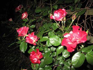 Flowers 2010 003