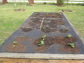 Garden & fountain 2010 005