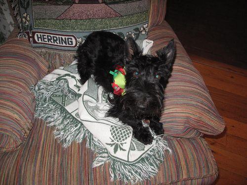 Christmas Sadie 2010 005