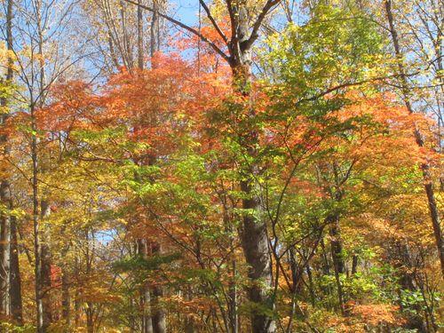 2011 Gatlinburg Fall Leaves 005