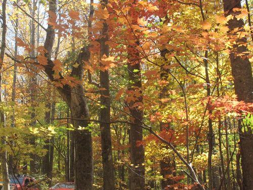 2011 Gatlinburg Fall Leaves 004