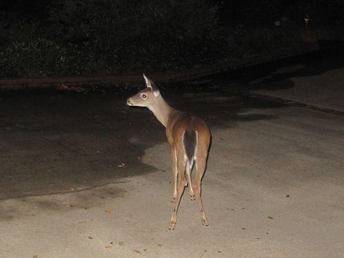 2011 Nana and Deer 010