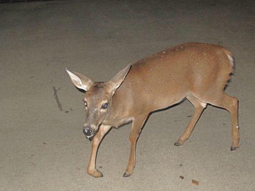 2011 Nana and Deer 008