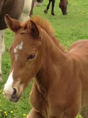 2012 new baby