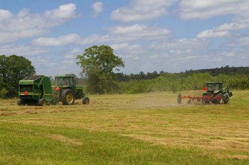 2012 April Hay and Yard 005