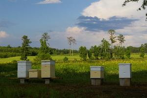 Beeshorsebabiesfinishingtouch07_017
