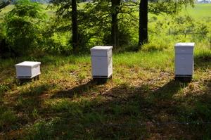 Beeshorsebabiesfinishingtouch07_0_2