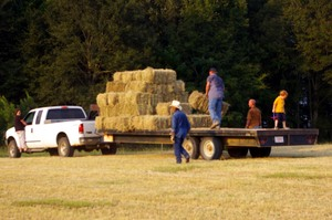 Hay_day_on_the_farm07_001