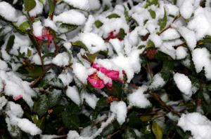 Snowday2008_023
