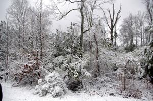 Snowday2008_059