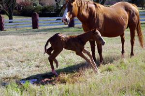 2008new_horsesdogsandchemo_013_2